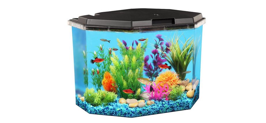 Aquarium kit anniversary