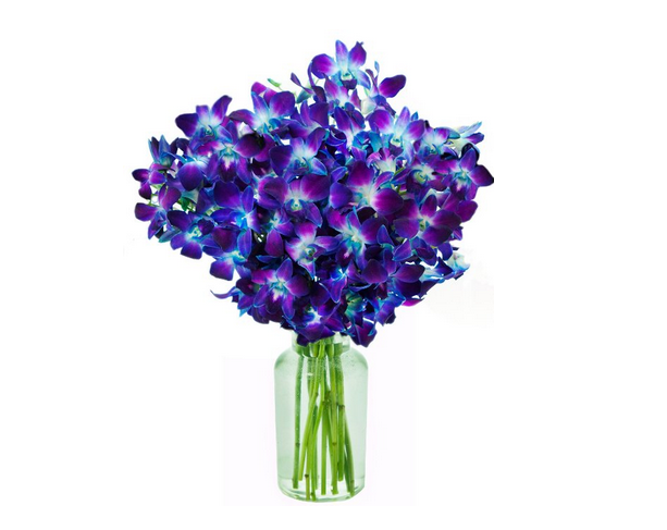 Blue orchid flower thank you gift ideas for her