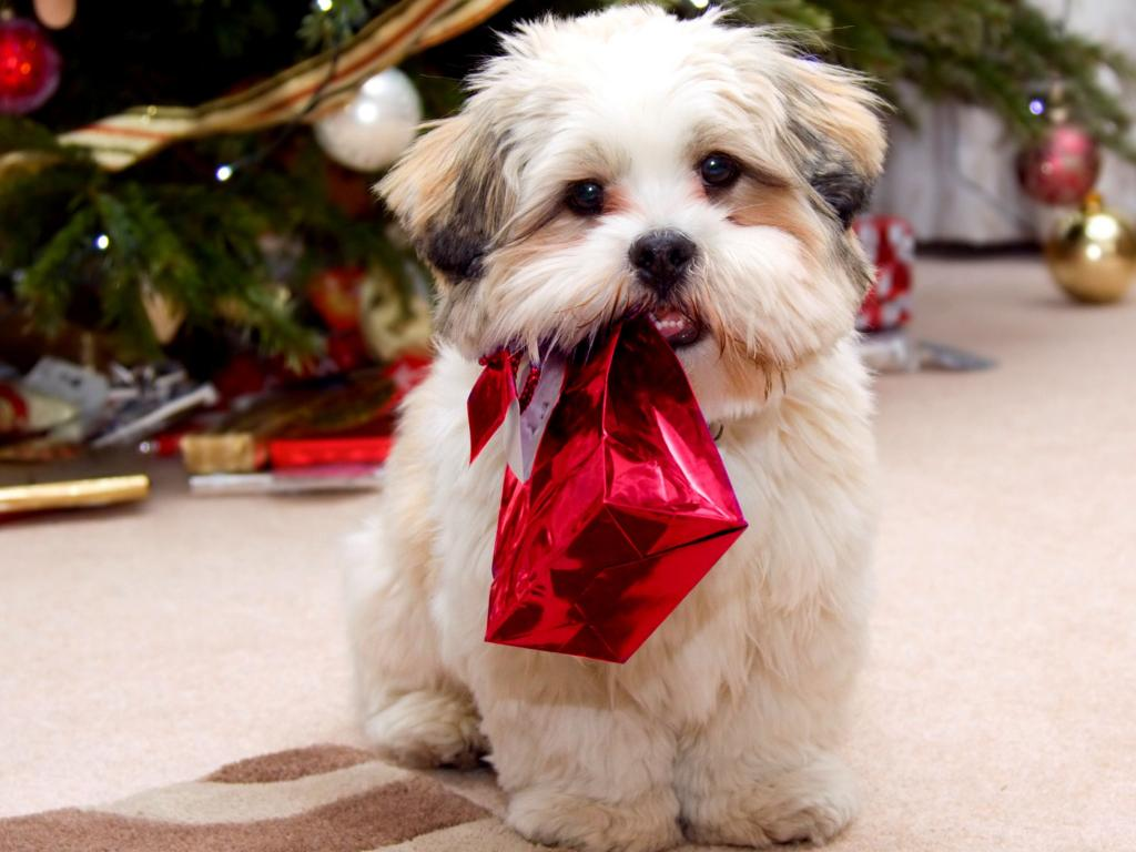 Gift someone a Christmas pet