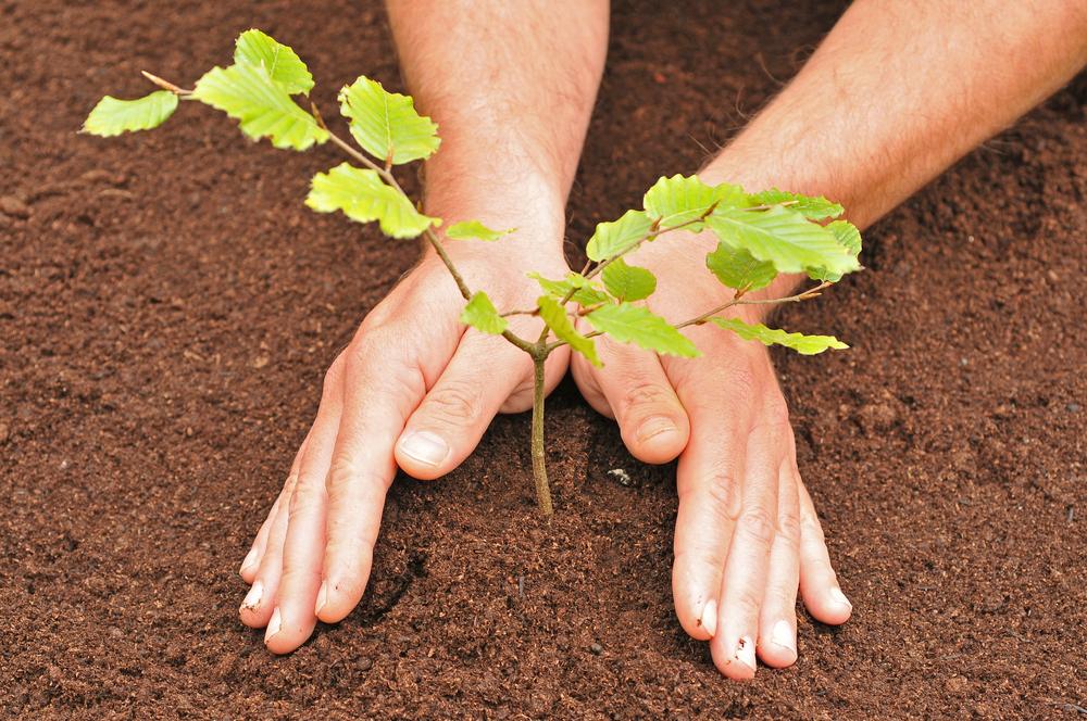 Plant atree