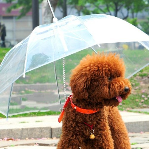 Dogbrella for their Dog