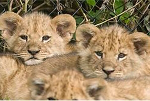knowsley-safari-park-family-ticket